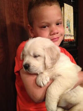 Little boy holding a young golden retriever puppy in his arms